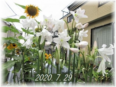 Photo_20200729221901
